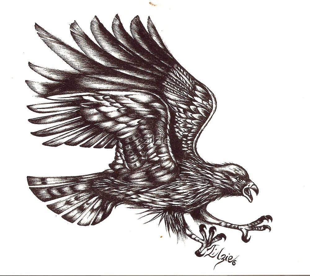 bird of prey by zilzie