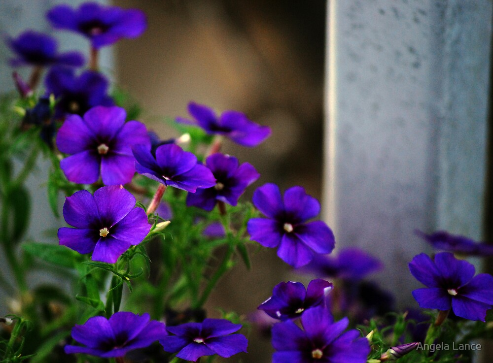 Little Purple Flowers.....  by Angela Lance