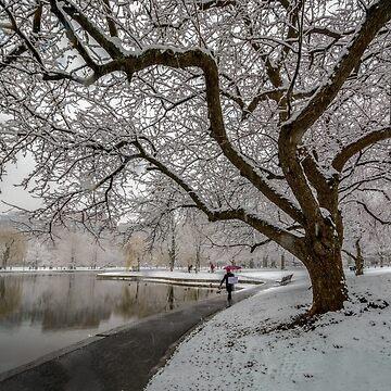 Boston Garden - winter walk by LudaNayvelt