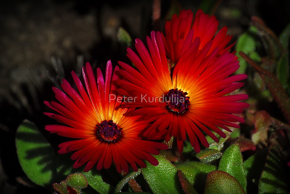 Honey, Don't We Glow When Together! by Peter Kurdulija