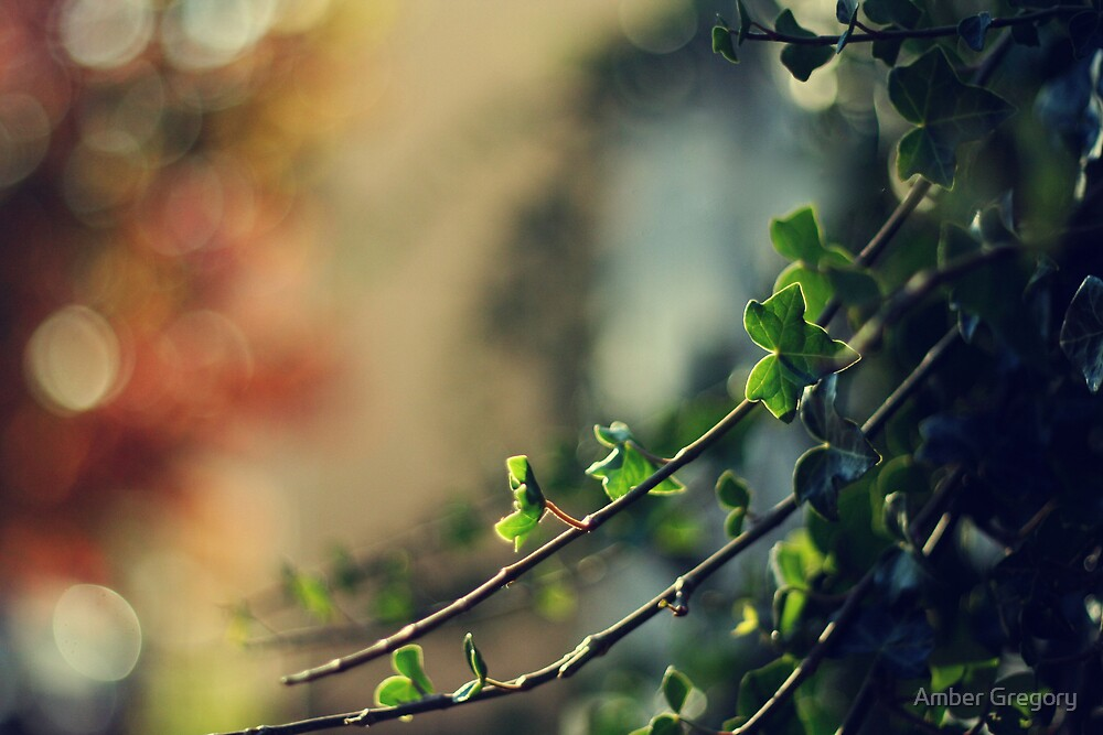 Like the changes that autumn brings, we need the courage to go ahead by Amber Gregory