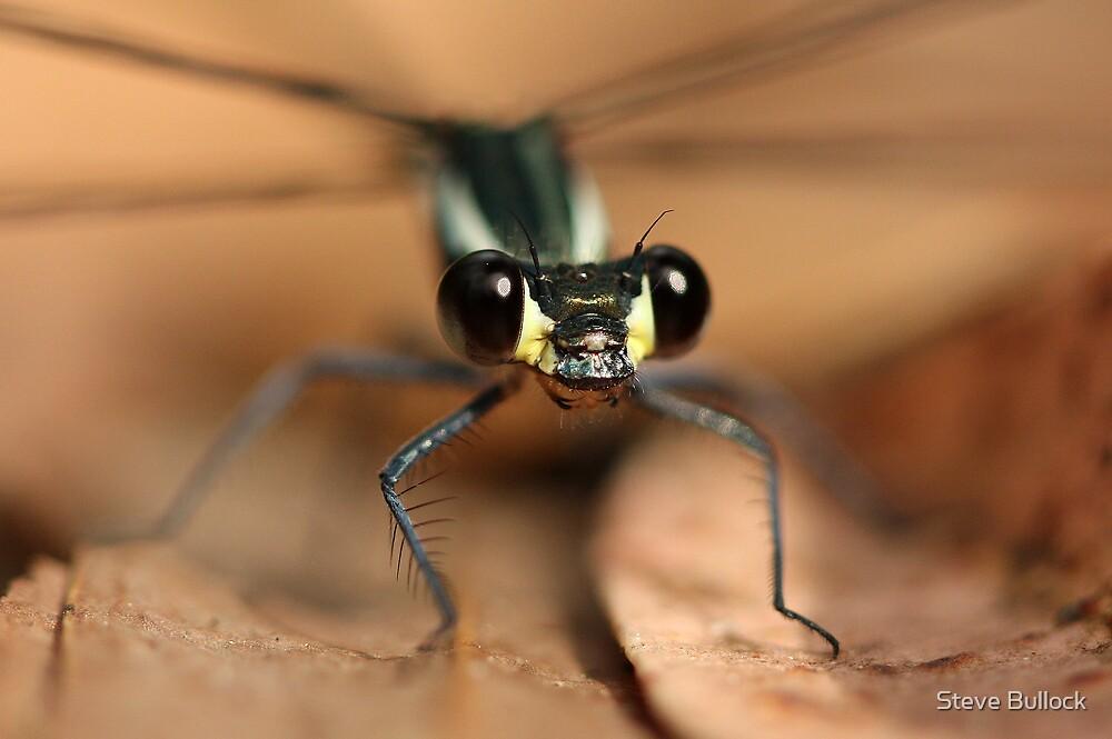 Dragon Fly by Steve Bullock