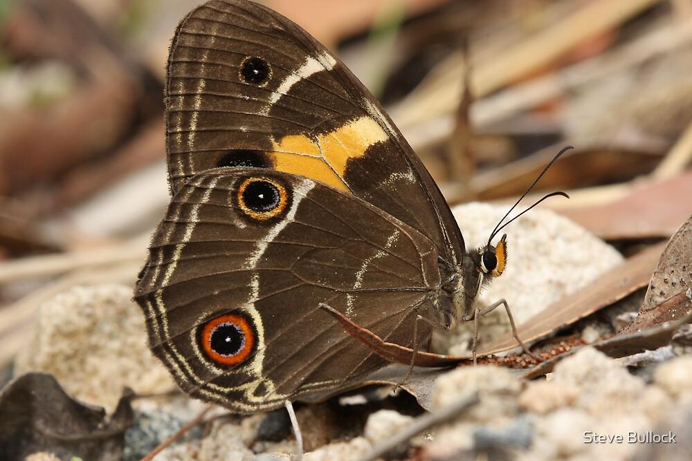 Butterfly - Varied Sword-grass by Steve Bullock