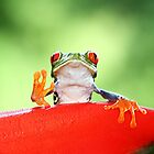 """""""Live long and Prosper"""" Red-eyed Tree Frog by Jim Cumming"""