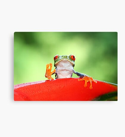 """Live long and Prosper"" Red-eyed Tree Frog Canvas Print"