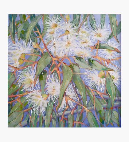 White gum blossom outside our window 2012Ⓒ. Oil on canvas Photographic Print