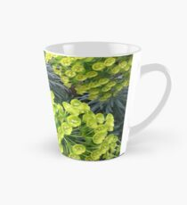 Euphorbia Tasse (konisch)