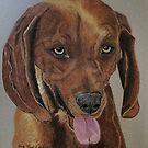 Redbone Coonhound by Anita Putman