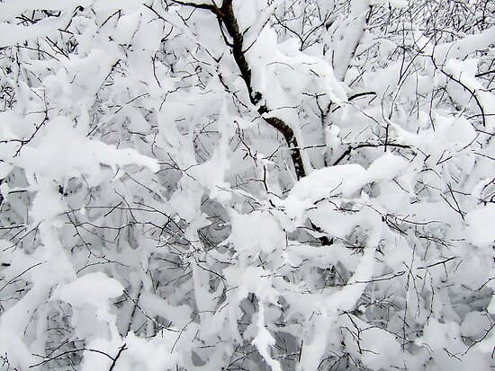 White silence by Bluesrose
