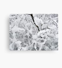 White silence Canvas Print