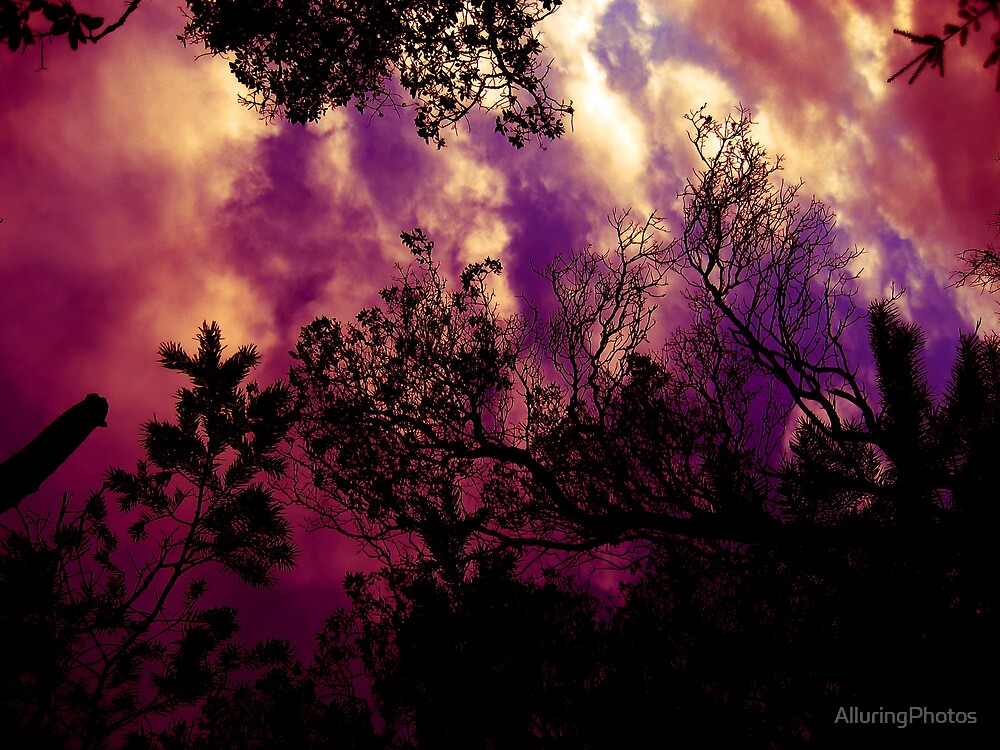 Clouds and Trees by AlluringPhotos