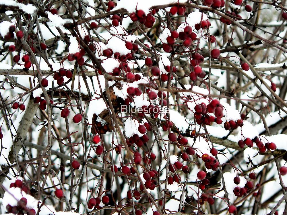 Birds' winter food by Bluesrose