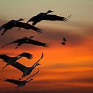 Crane Song by Valentina Gatewood