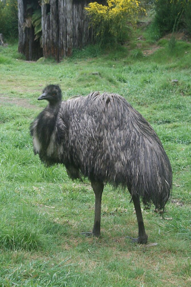 Emu by Jay Spadaro