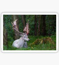 Stag(deer) Sticker