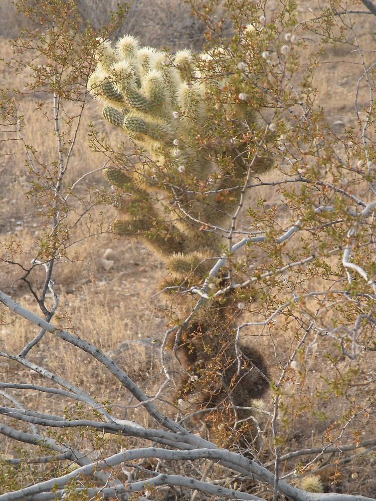 cactus Wonder by Bonnie Pelton