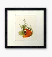 Fox Sleeping Framed Print
