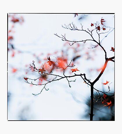 I see strawberries in the bokeh; Rikugien Park, Tokyo Photographic Print