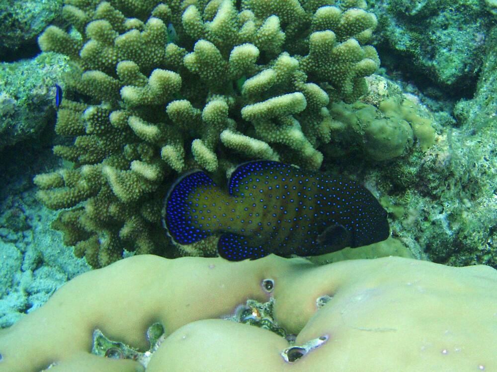 Peacock hind by presbi