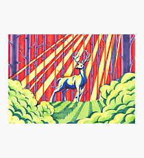 The Rainbow Forest Photographic Print