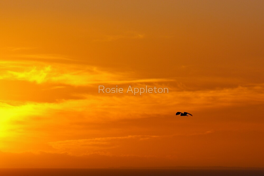 Sunset Hunt by Rosie Appleton