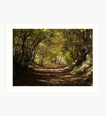 Into the Woods... Art Print