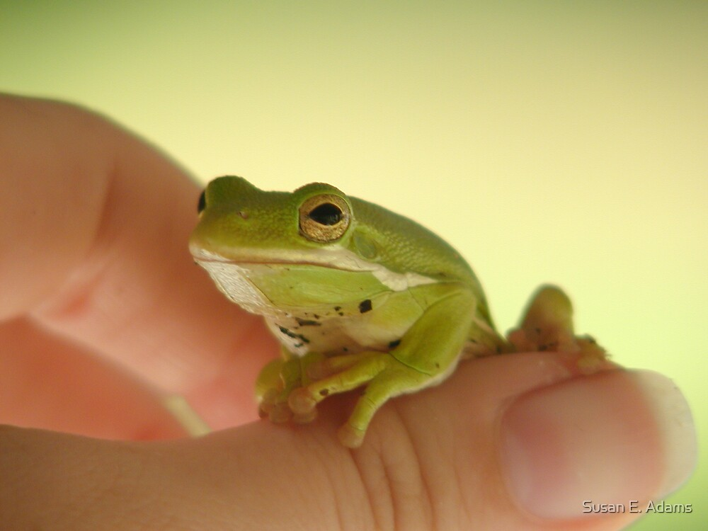Frog On My Thumb by Susan E. Adams