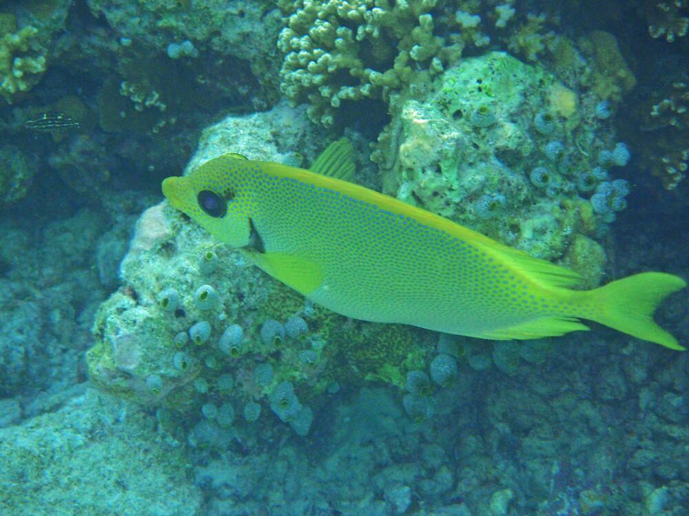 Lemonfish by presbi