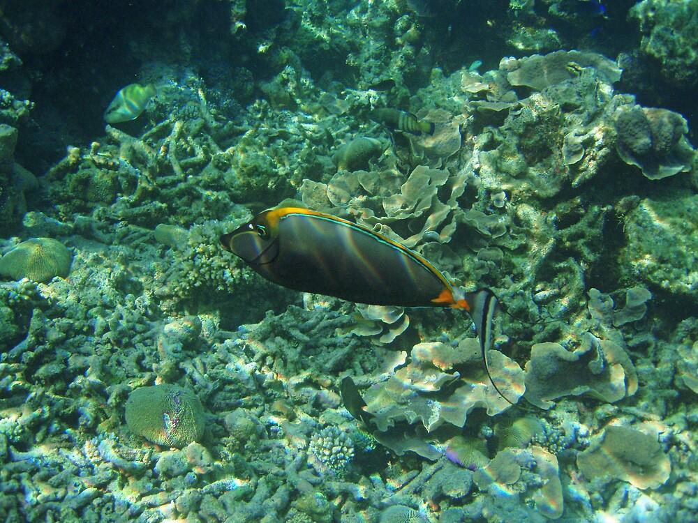 Orangespine unicornfish # 2 by presbi