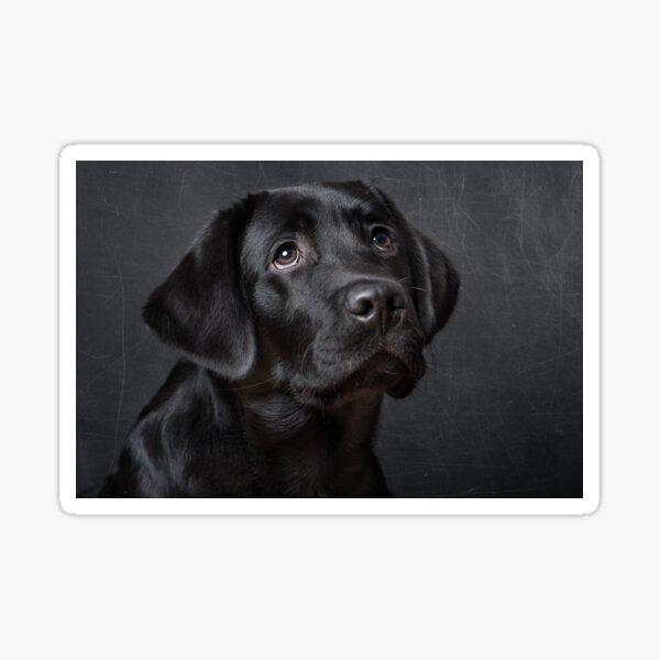 Labrador pup Sticker