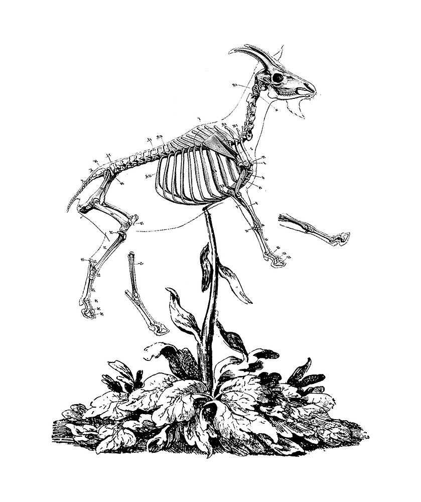 The Vegetable Lamb (Goat, in this case) of Tartary meets the Australian Drought by Mortimer Lang
