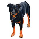 rottweiler by Apatche Revealed