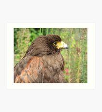 Eagles dare Art Print