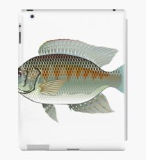 Tilapia Market fish iPad Case/Skin