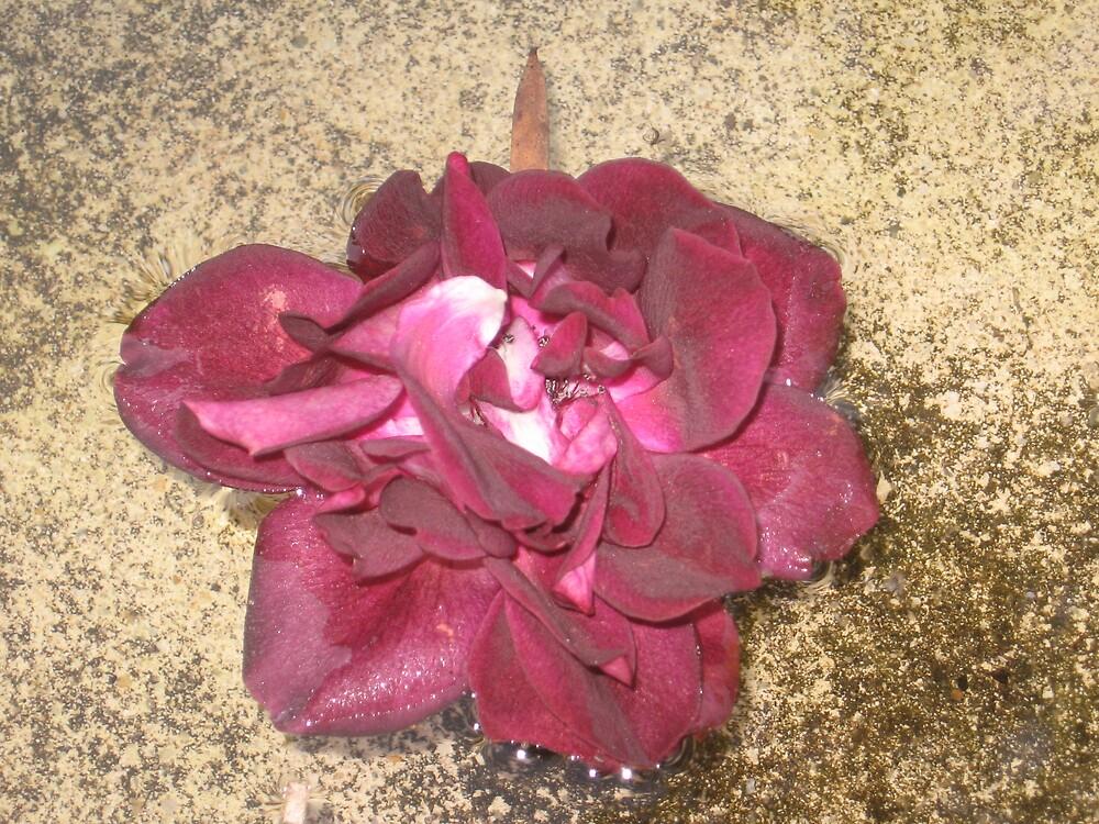 floating rose by angelbabigurl