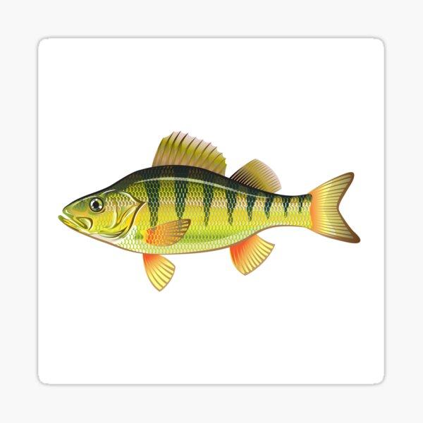 Yellow Perch Sticker