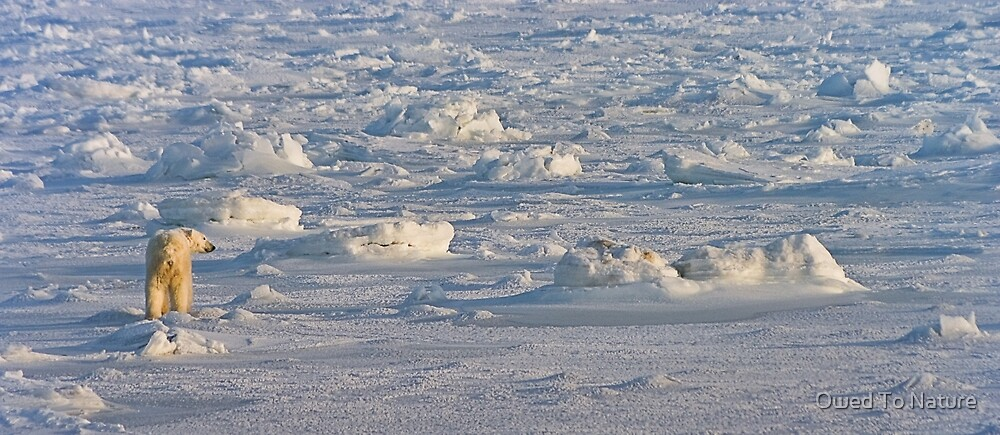 Between sea and ice by Owed To Nature