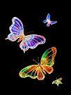 Butterflies - Night Flight by Linda Callaghan