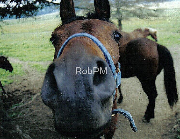 Muggin for the camera by RobPM