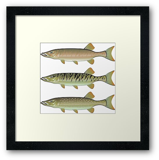 Musky Tiger Musky Northern Pike by vectorworks51
