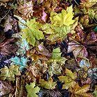 Autumn Leaves by Simon Duckworth
