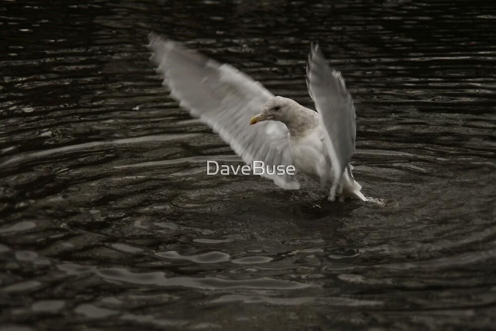 Water landing  by DaveBuse