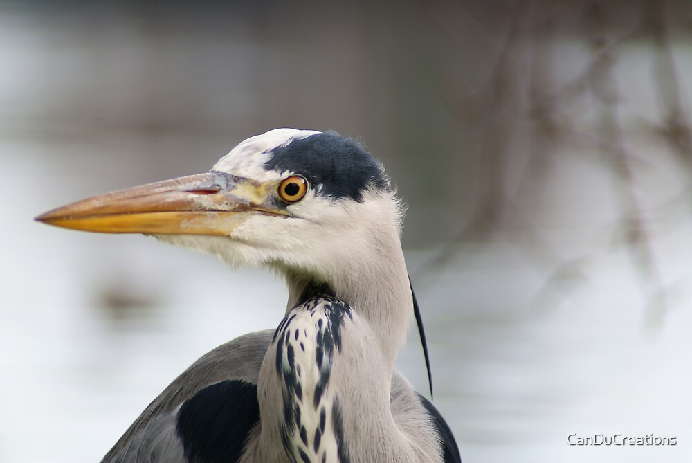 the Blue heron by CanDuCreations