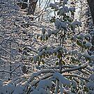 Snowshine by Eileen McVey