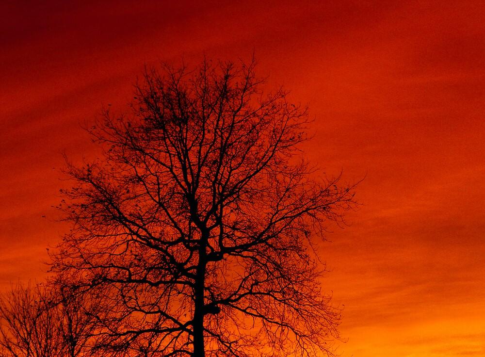 Evening Sky by NotTinyTim