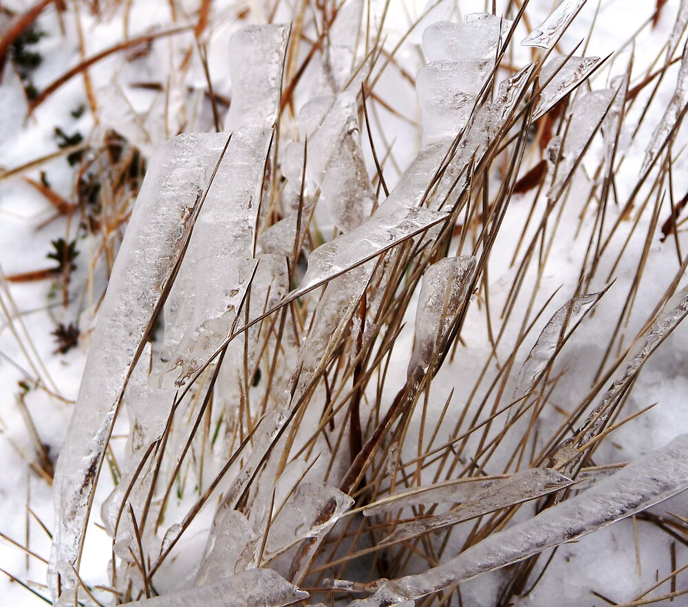 Grass Icicles by Braedene