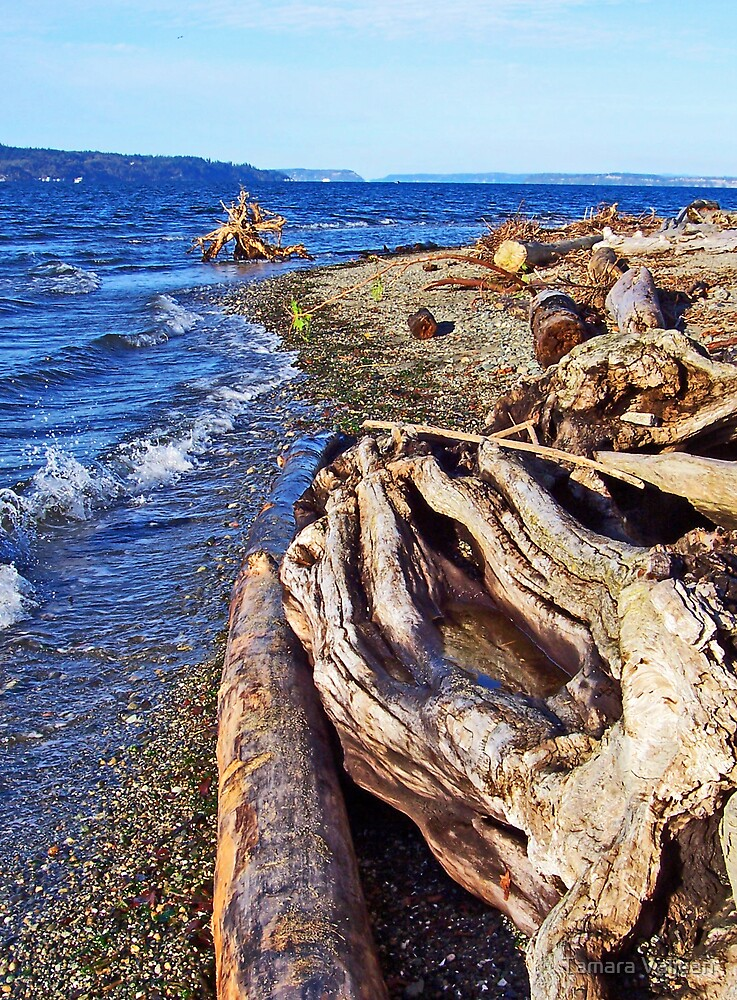 Picnic Point Driftwood 1 by Tamara Valjean