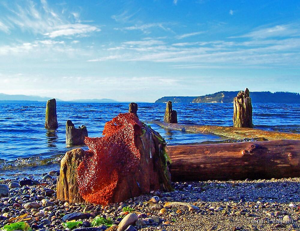 Picnic Point Driftwood 8 by Tamara Valjean