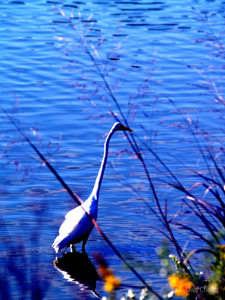 Egret in blue background by Dan Chang