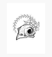 Falcon Skull Photographic Print